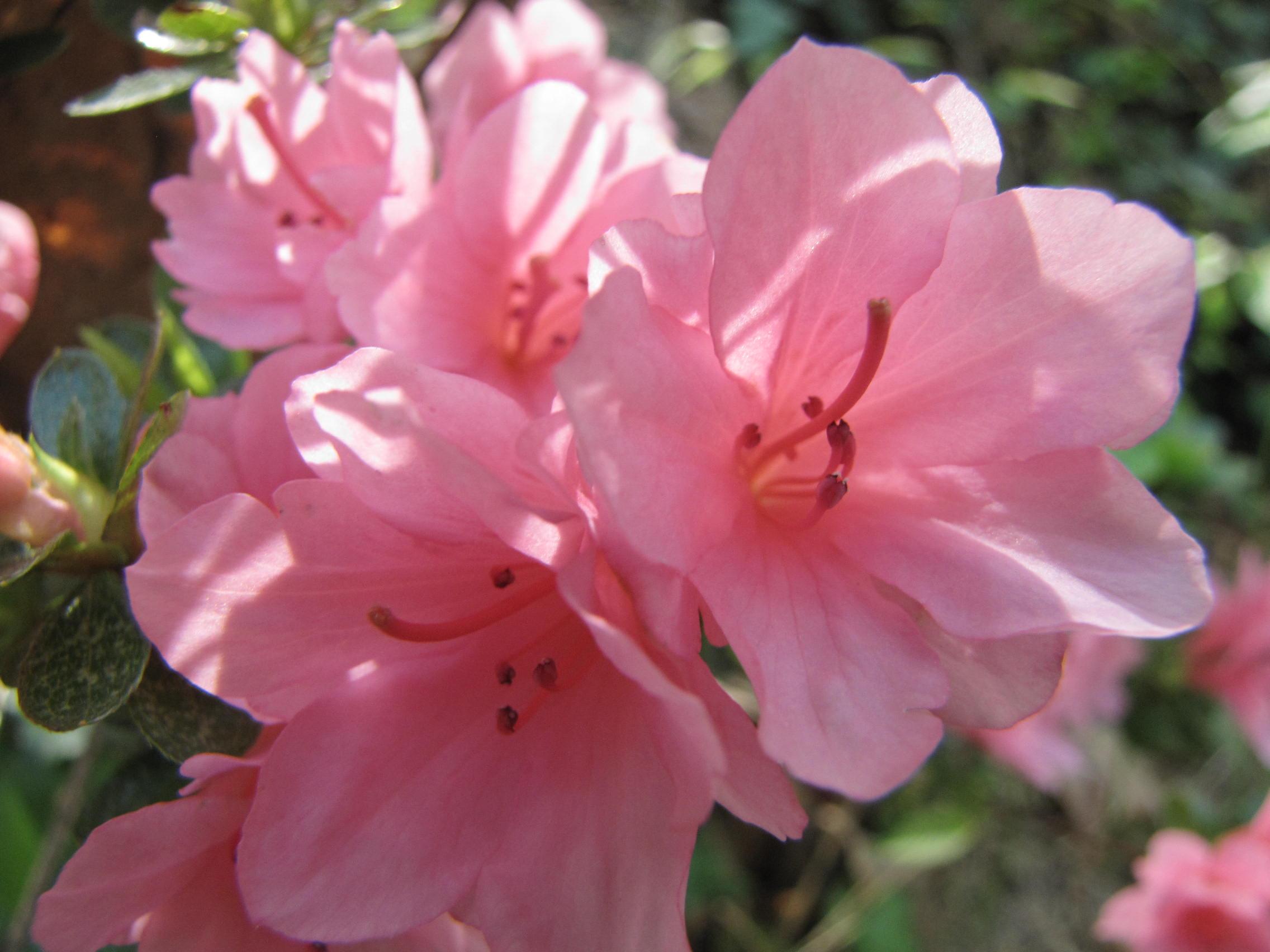 Pretty Pink Flowers By Prettypunkae