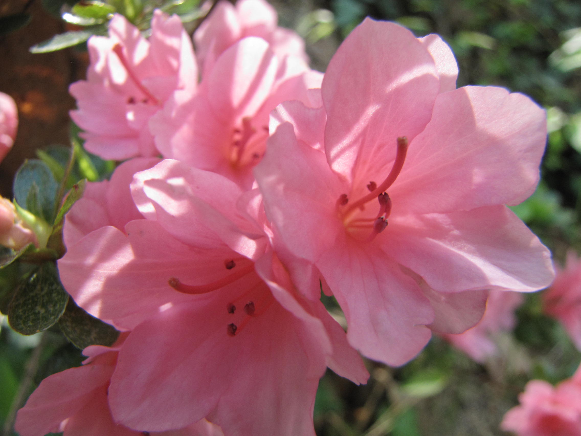Pretty Pink Flowers by prettypunkae on DeviantArt