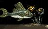 Killer Fish of Doom by VilleBlab