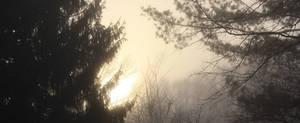 Fog-V