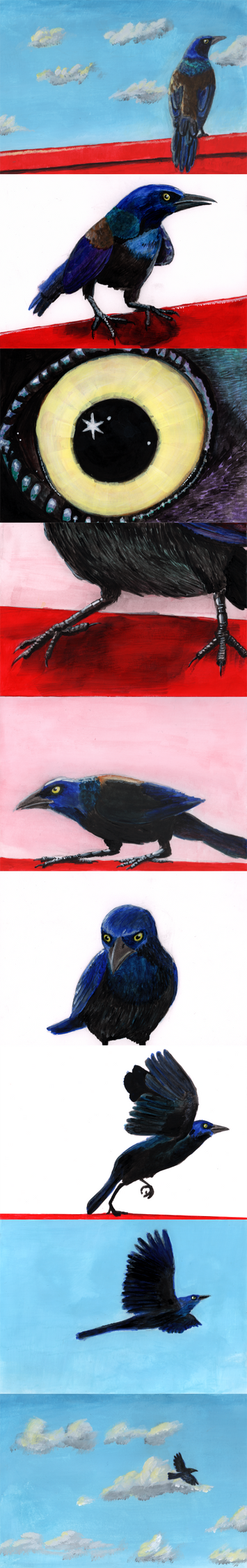 Illustrations for A Grackle on a Porch Guardrail by sirustalcelion