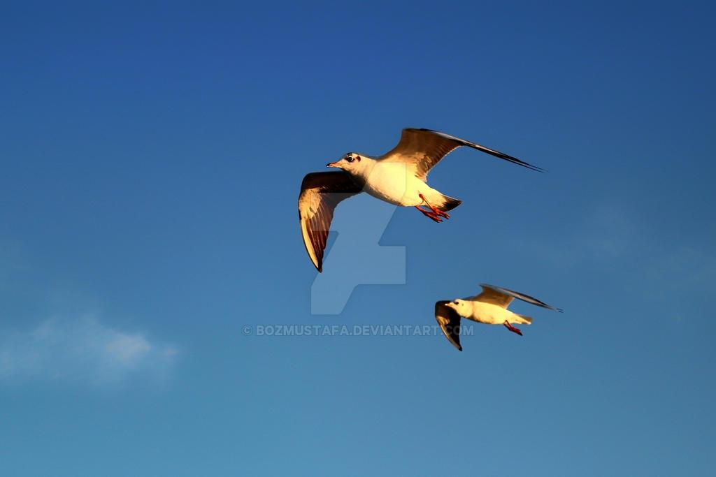 Seagulls of Izmir