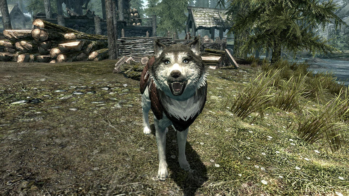 Dog Training Game Bag