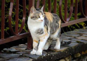 Cat by NDC880117