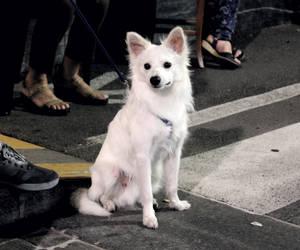 White dog by NDC880117