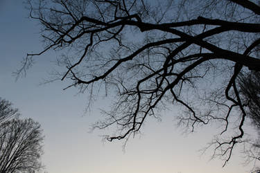 Tree silhouette by NDC880117