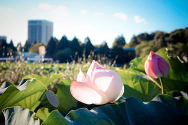 Ueno Park I