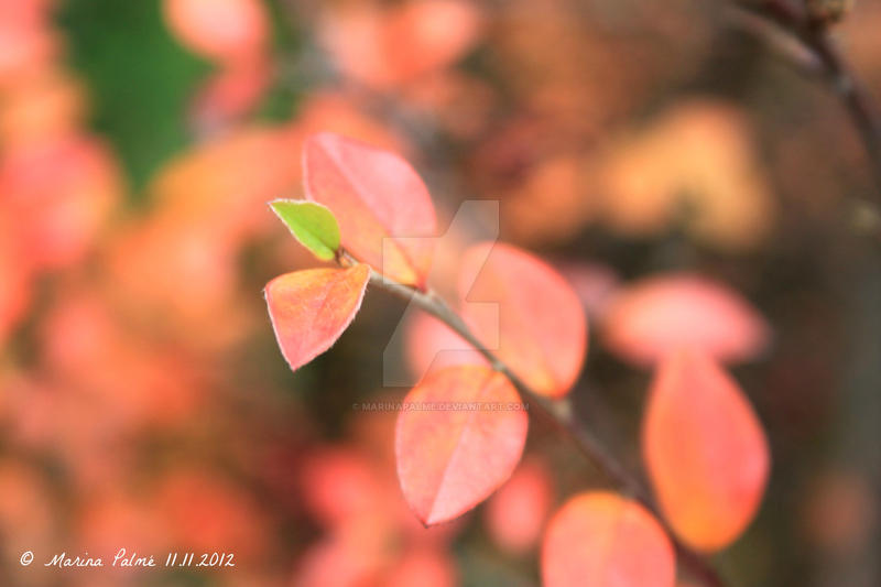 Orange autumn - the last green leaf. by MarinaPalme