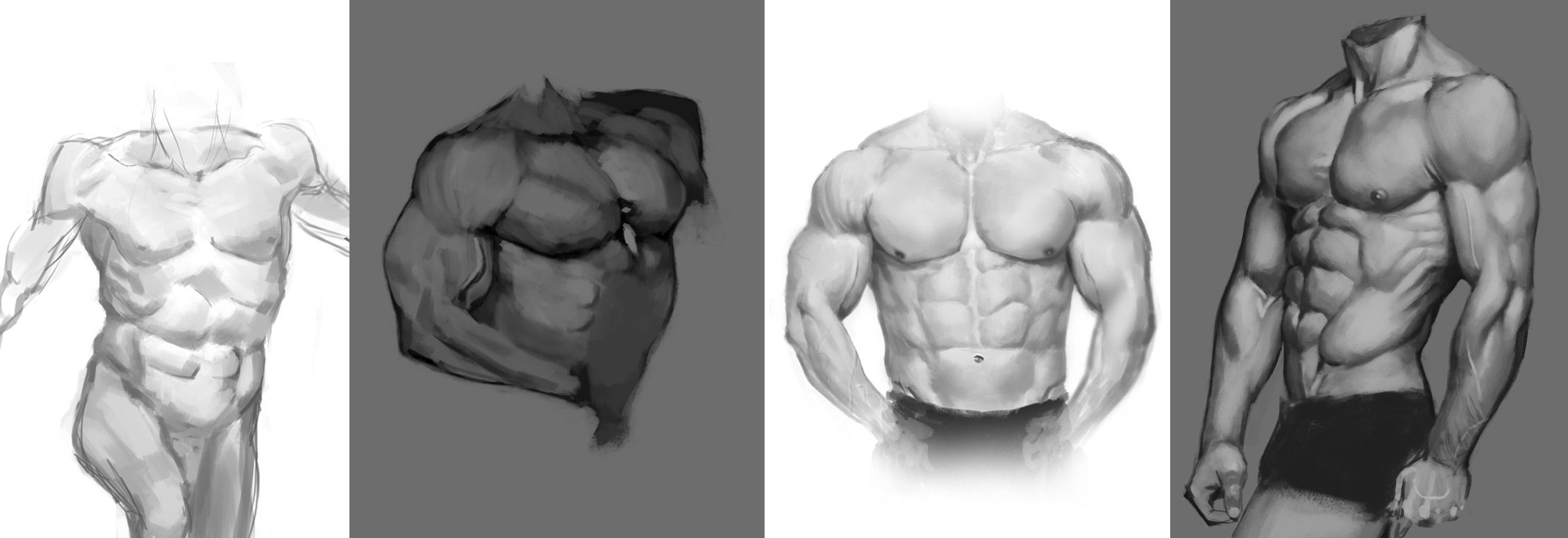 male anatomy studies by Toramarusama on DeviantArt