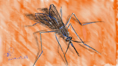 Mosquito by coolwanglu