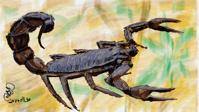 Scorpion by coolwanglu