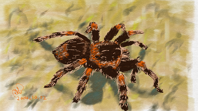 Tarantula by coolwanglu