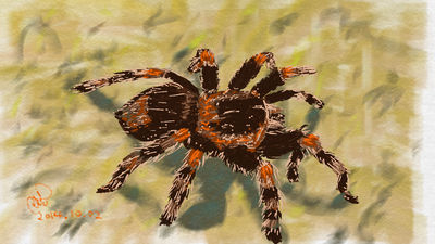 Tarantula by coolwanglu