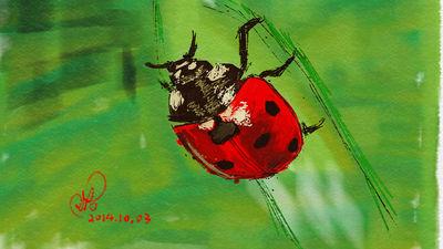 Ladybug by coolwanglu