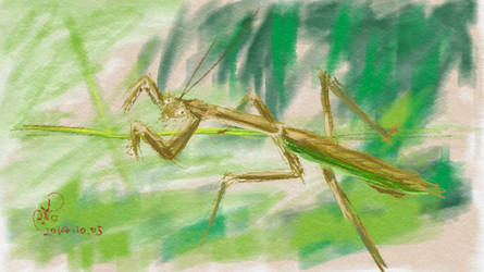 Mantis by coolwanglu
