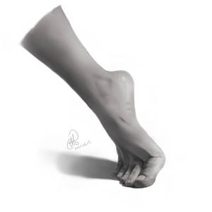 Anatomy Practice: Foot