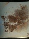 skull realism by AsatorArise
