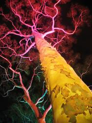 Illuminated Tree by GoOdz