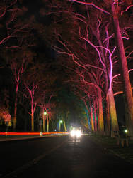 Kings Park Trees by GoOdz