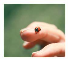 Hello, Ms Ladybird.