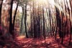 Magic forest.
