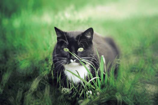 Green hypnosis