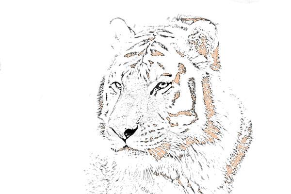 Tiger Impression! by GudServo