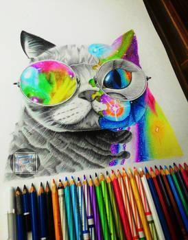 Pip-Pop Cat