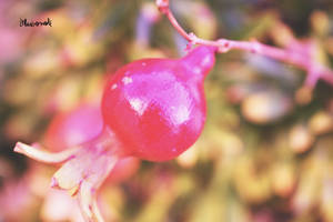 The little pomegranate by Bluuberwolf