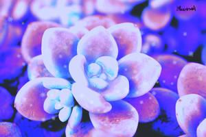 Winter cactus by Bluuberwolf