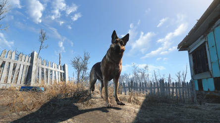 Awesome Dogmeat!
