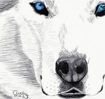 BLue Eyes by Cindy-R