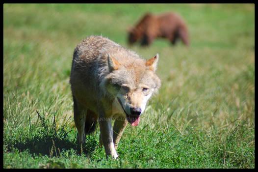 - WSPA medveotthon (bear farm) II -