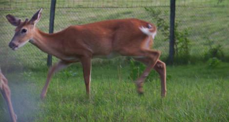 Buck 9