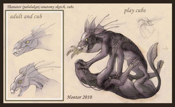 Thanator anatomy sketch_4 by hontor