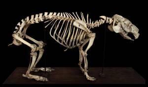 Skeleton capybaras