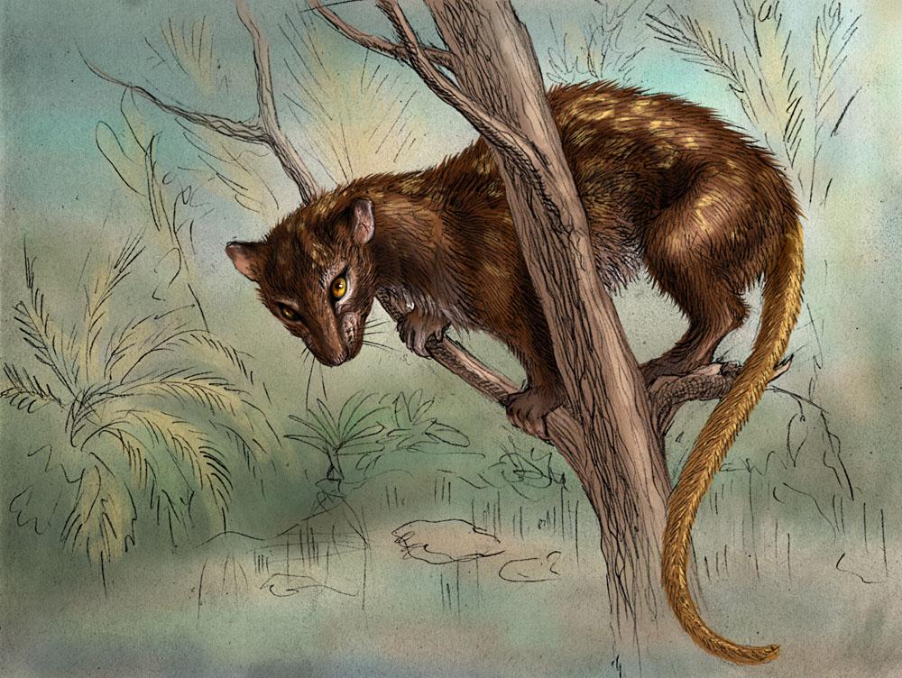 Lemur-rat by hontor