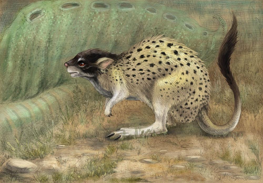 Kangaroo rat scavenger by hontor