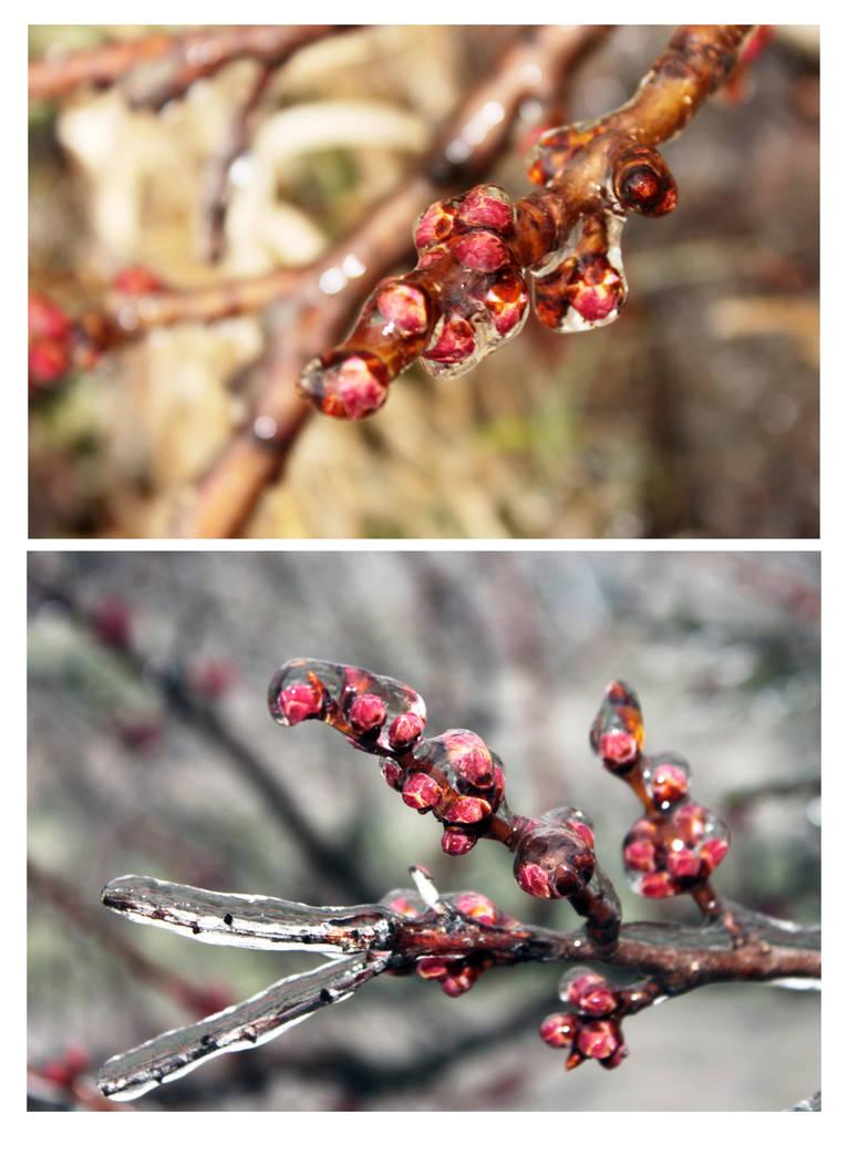 Ice Spring