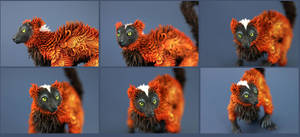 Lemur face by hontor
