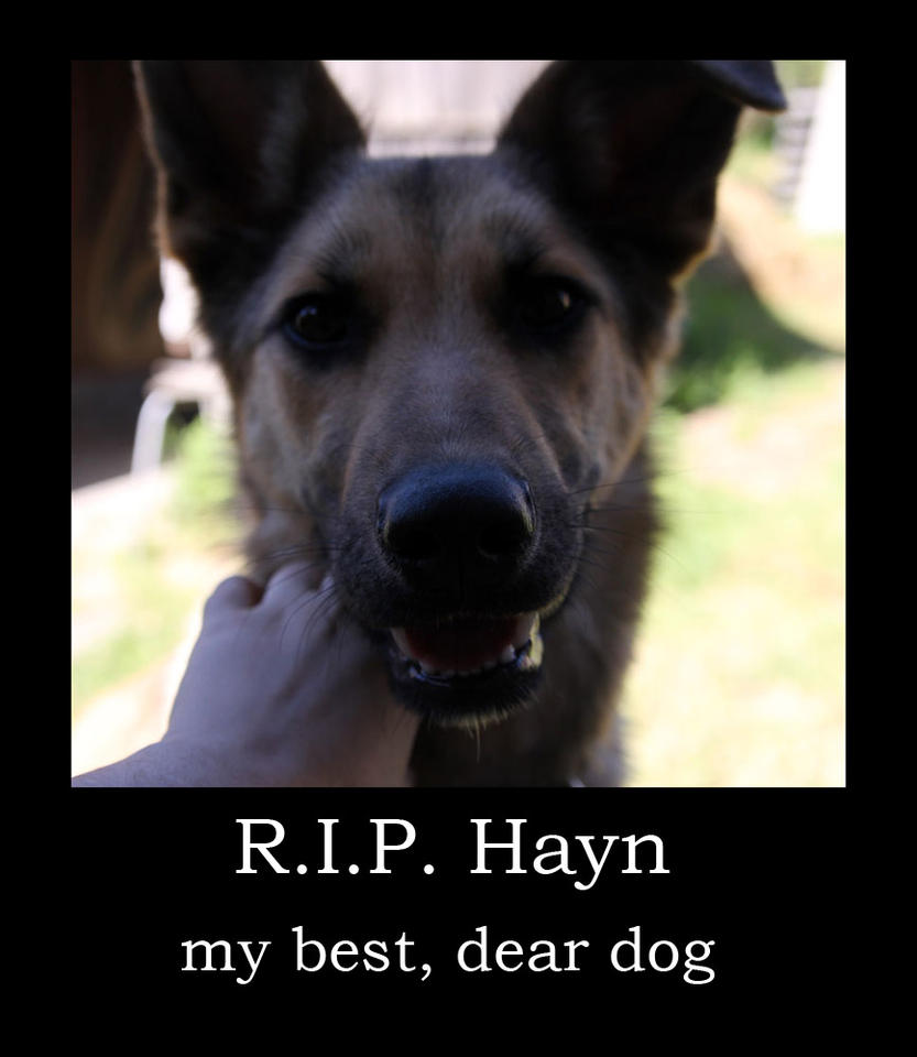 Hayn... by hontor