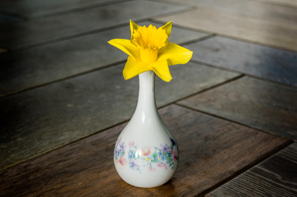 Daffodil and vase... by ollie2008