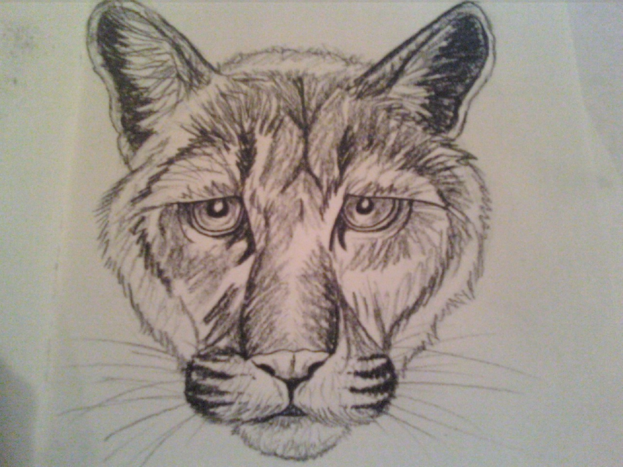 how to draw a mountain lion face