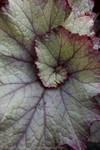 Botany - Fractal Geometry