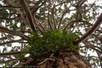 Botany - Chaos