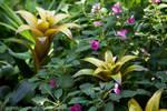 Botany - Bromeliad
