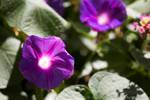 Botany - Inner Light