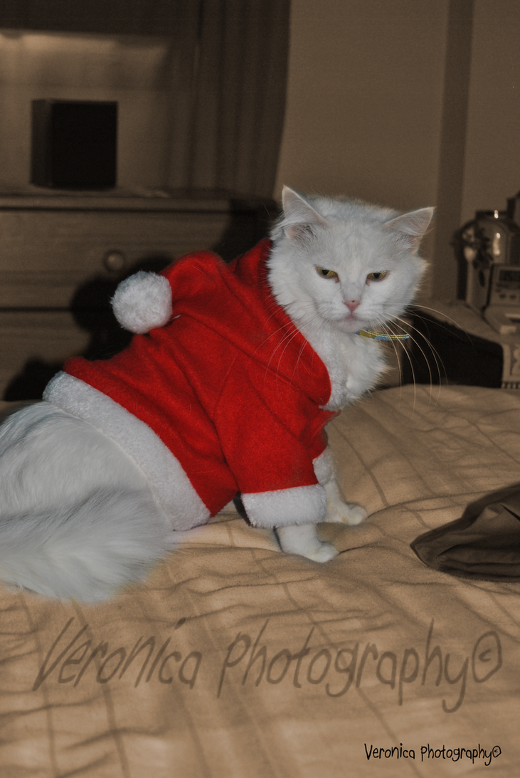 Happy Christmas Holidays by Vero-Light