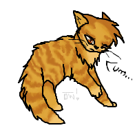 This is a golden tabby. by Optimistic-Whiteout