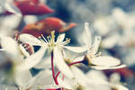 In Blossom by FeliDae84